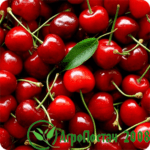 Как и чем правильно удобрять плодовые деревья