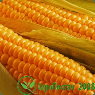 Экспорт кукурузы