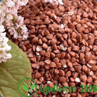 Продам зерно, бобовые, масличные, посевной материал.