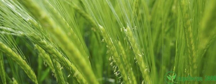 Новости Аграрно промышленного сектора Украины